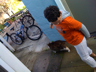 Throwing out the cats: a morning ritual